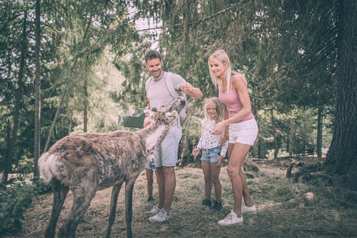 Aktywne lato w 3 Zinnen z PortaSki